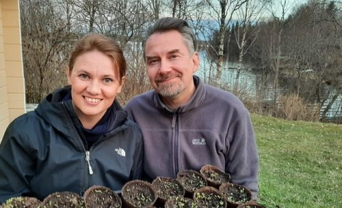Tarja ja Mika Luukko kylvivät siemeniä multaan, osa jo itää